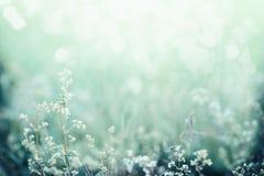 Солнечный свет утра на поле травы и цветков красивейшая природа ландшафта Стоковая Фотография RF