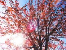 Солнечный свет через ветви дерева цвета падения Стоковые Фотографии RF