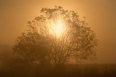 Солнечный свет через ветви уединённого дерева Стоковое Фото