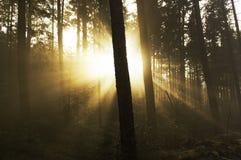 Солнечный свет через деревья стоковые изображения