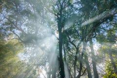 Солнечный свет через светлые дерево и туман Стоковые Изображения