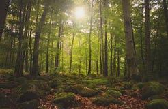 Солнечный старый лес Стоковое фото RF