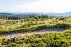 Солнечный туристский след в древесинах в осени Стоковые Фото