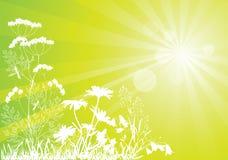 Солнечный лужок Стоковая Фотография RF