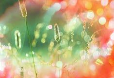 Солнечный лужок Стоковое Изображение