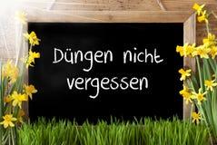 Солнечный Narcissus, доска, середины Duengen Nicht Vergessen не забыть навоз Стоковая Фотография