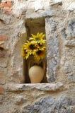 Солнцецветы в стене Стоковая Фотография