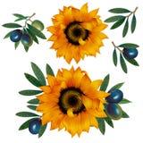 Солнцецветы и оливки. Стоковые Фото