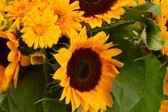 Солнцецветы и цветки ноготк закрывают вверх Стоковое Изображение RF