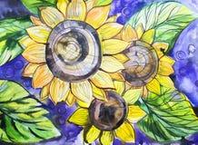 Солнцецветы картины акварели на голубой предпосылке Стоковые Изображения RF