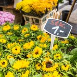 Солнцецветы на рынке цветка на улице Амстердама Стоковая Фотография RF