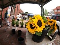 Солнцецветы для продажи на рынке Стоковая Фотография RF
