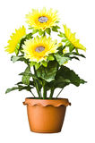 Солнцецвет в вазе стоковое изображение rf