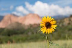 Солнцецвет в саде богов Стоковое фото RF
