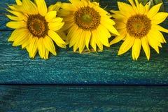 Солнцецвет года сбора винограда цветка лета предпосылки искусства флористический Стоковое Изображение RF