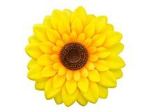 Солнцецвет изолированный на белой предпосылке Стоковое Изображение