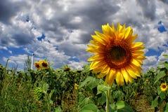 Солнцецвет и ветрогенератор стоковое изображение