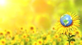 Солнцецвет и земля на солнечной предпосылке Стоковые Изображения RF