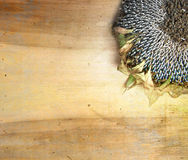 Солнцецвет на деревянной предпосылке Стоковые Изображения RF