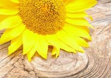 Солнцецвет на деревянной предпосылке Стоковые Фотографии RF
