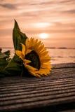 Солнцецвет на озере стоковое изображение rf