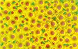 солнцецвет предпосылки близкий вверх Стоковые Фото