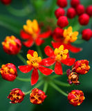 солнцецвет семян цветка предпосылки blossoming Стоковое Фото