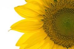 Солнцецвет, селективный фокус стоковое фото rf
