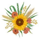 Солнцецвет, ячмень, пшеница, рожь, рис, мак Элементы флористического дизайна собрания декоративные Стоковая Фотография