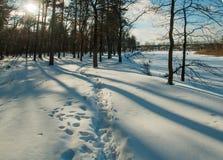 Солнце берега реки реки леса зимы Стоковое Изображение RF