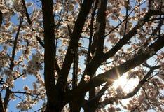 Солнце весны Стоковые Изображения