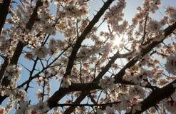 Солнце весны Стоковые Фото
