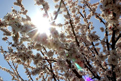 Солнце весны Стоковое Изображение RF