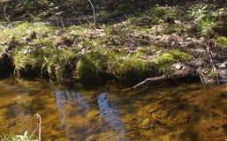 Солнце воды ярко светит мох травы Стоковое Изображение