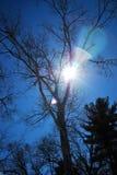Солнце всматривается однако ветви дуба на последнем после полудня 2 зим Стоковые Фотографии RF