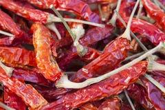 Солнце высушило красные тайские Chilies Стоковая Фотография RF