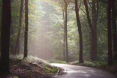 Солнце в лесе Стоковые Фотографии RF