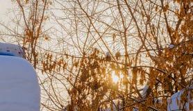 Солнце в зиме Стоковая Фотография RF
