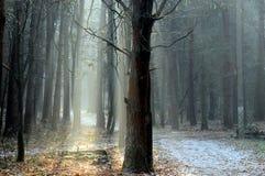 Солнце в ноябре Стоковые Фото