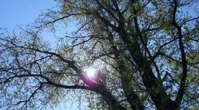 Солнце в полдень стоковое фото