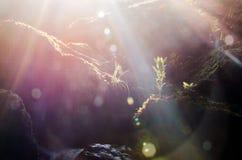 Солнце в пуще Стоковая Фотография