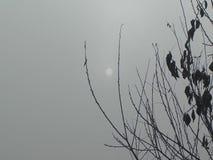 Солнце в тумане видеоматериал