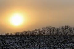 Солнце в утре Стоковые Фотографии RF