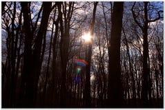 Солнце в forrest Стоковая Фотография