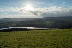 Солнце -го декабрь в Йоркшире Стоковая Фотография RF