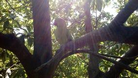 Солнце, дерево, изумлять комбинации попугая Стоковое Фото