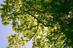 Солнце деревьев Стоковые Фото