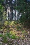 Солнце леса Стоковое Фото