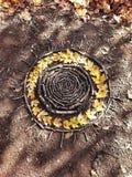 Солнце - естественная мандала Стоковая Фотография