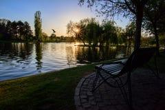 солнце летания птицы к Стоковая Фотография